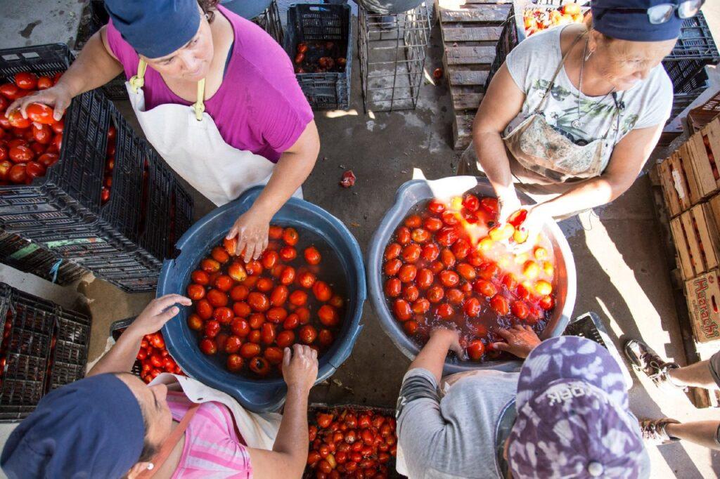 Movimiento Nacional Campesino Indígena Somos Tierra reforma agraria agroecología